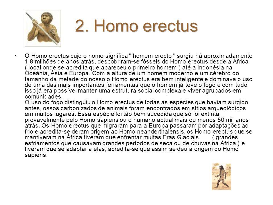 2. Homo erectus