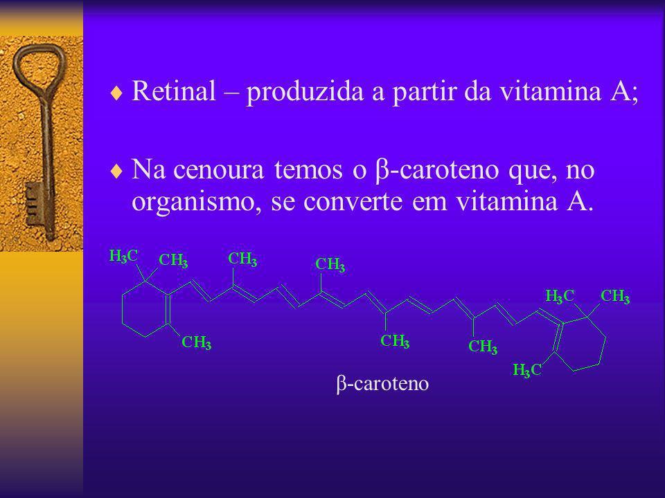 Retinal – produzida a partir da vitamina A;