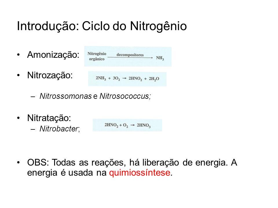 Introdução: Ciclo do Nitrogênio
