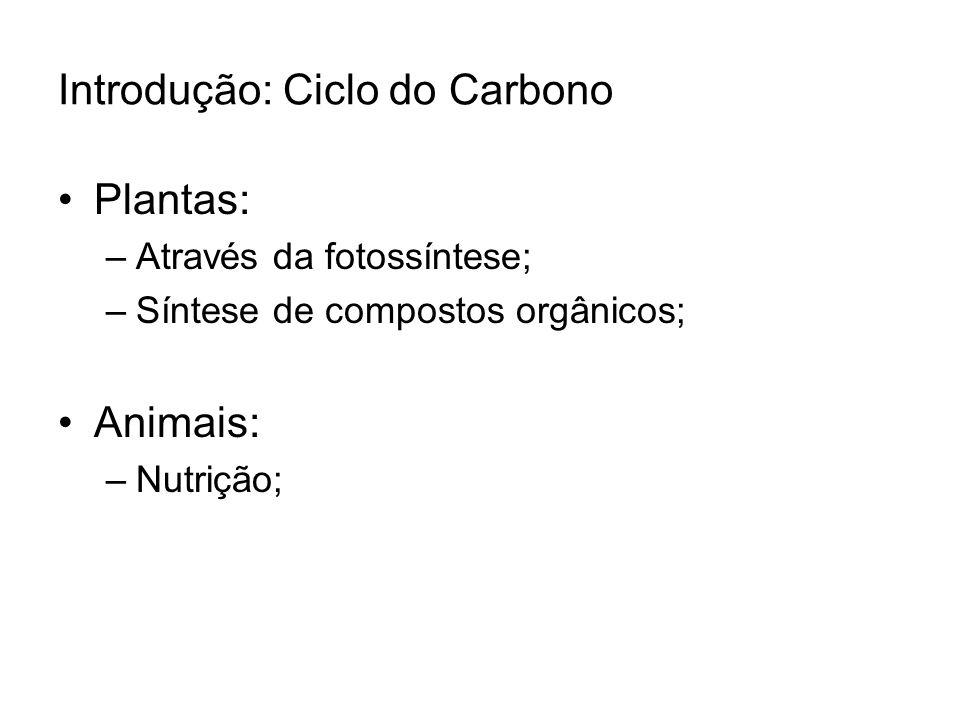 Introdução: Ciclo do Carbono
