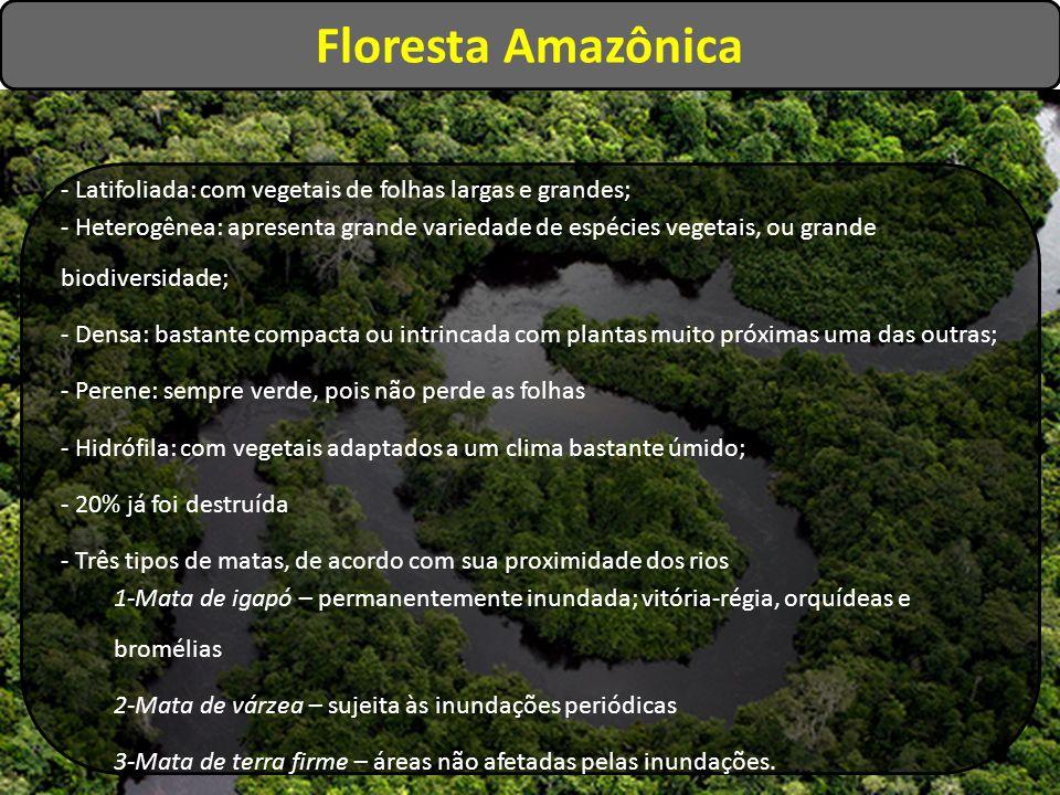 Floresta Amazônica - Latifoliada: com vegetais de folhas largas e grandes;