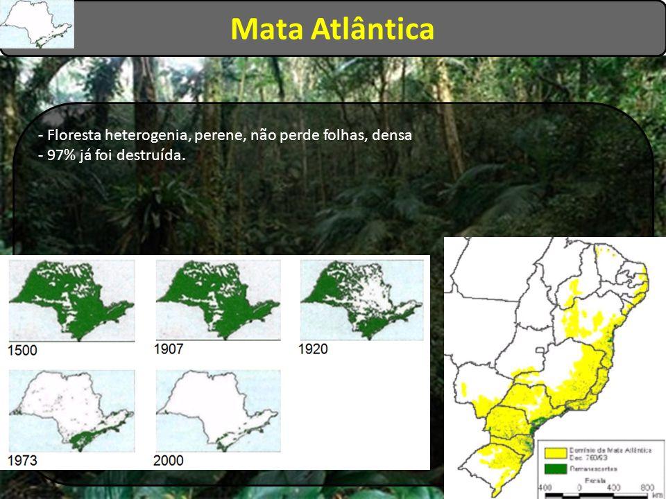 Mata Atlântica - Floresta heterogenia, perene, não perde folhas, densa