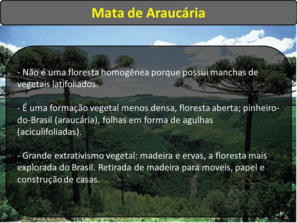 Mata de Araucária - Não é uma floresta homogênea porque possui manchas de vegetais latifoliados.