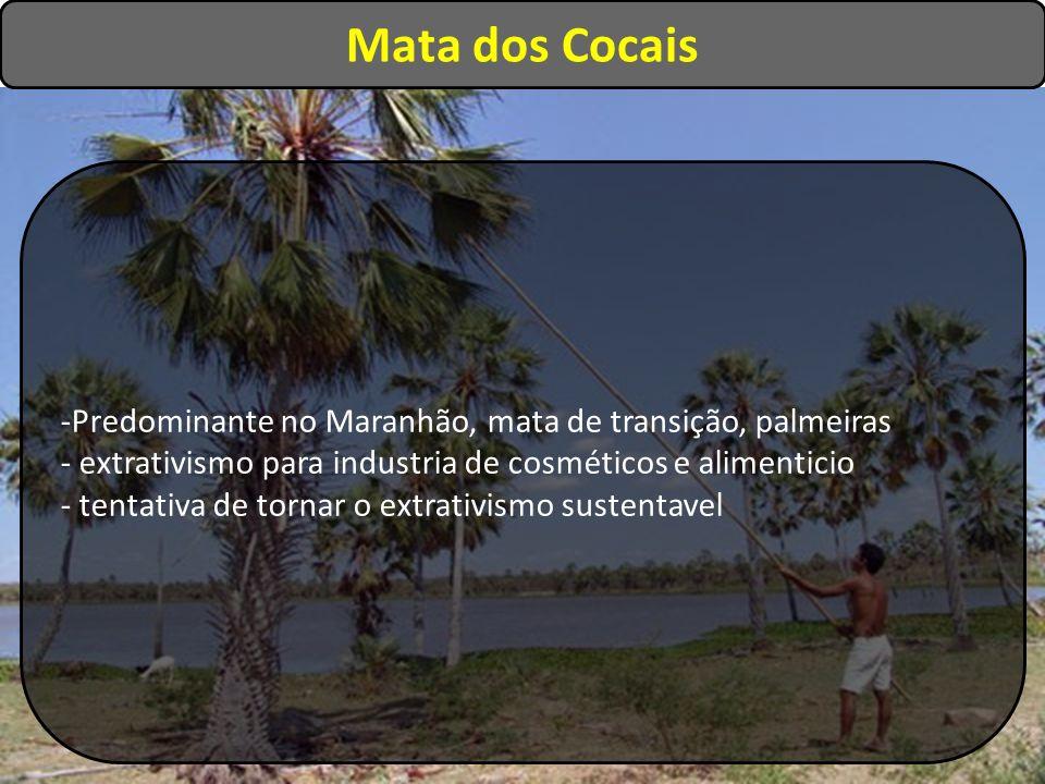 Mata dos Cocais Predominante no Maranhão, mata de transição, palmeiras