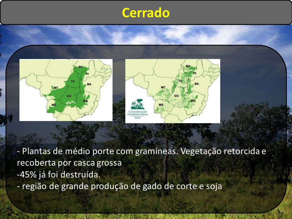Cerrado - Plantas de médio porte com gramíneas. Vegetação retorcida e recoberta por casca grossa. 45% já foi destruída.