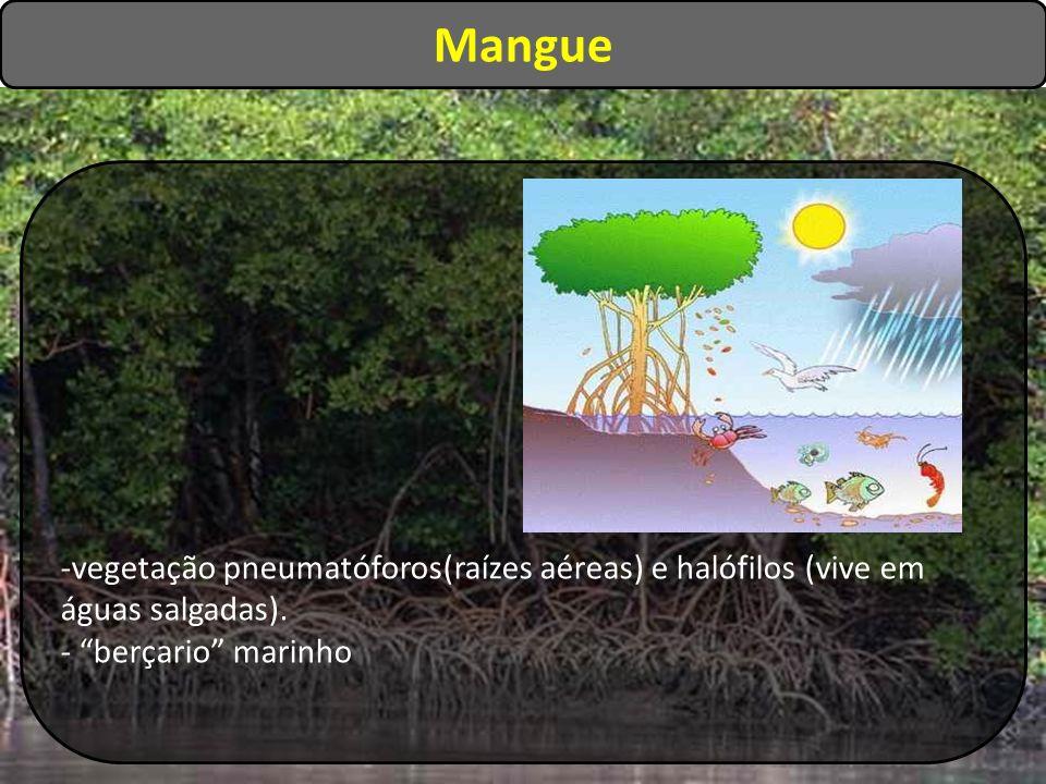 Mangue vegetação pneumatóforos(raízes aéreas) e halófilos (vive em águas salgadas).