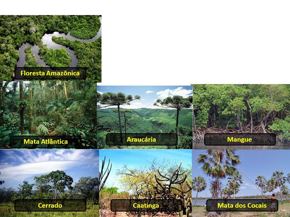 Floresta Amazônica Araucária Mangue Mata Atlântica Cerrado Caatinga Mata dos Cocais