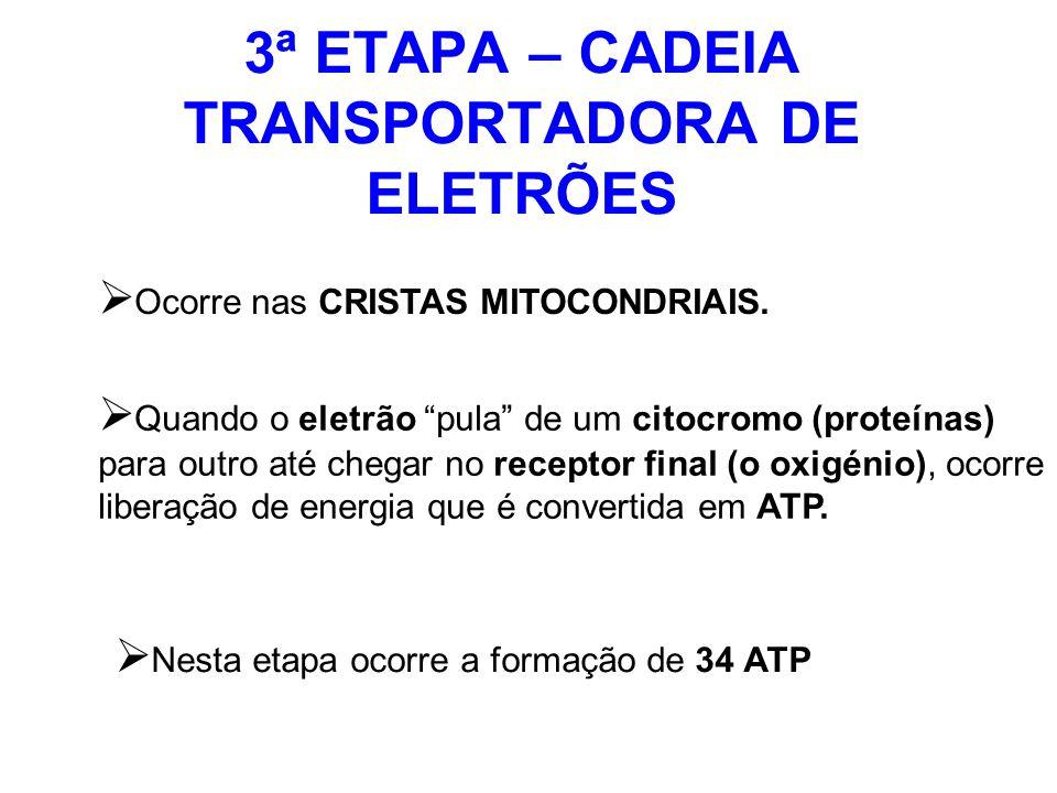 3ª ETAPA – CADEIA TRANSPORTADORA DE ELETRÕES