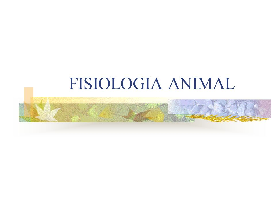 FISIOLOGIA ANIMAL
