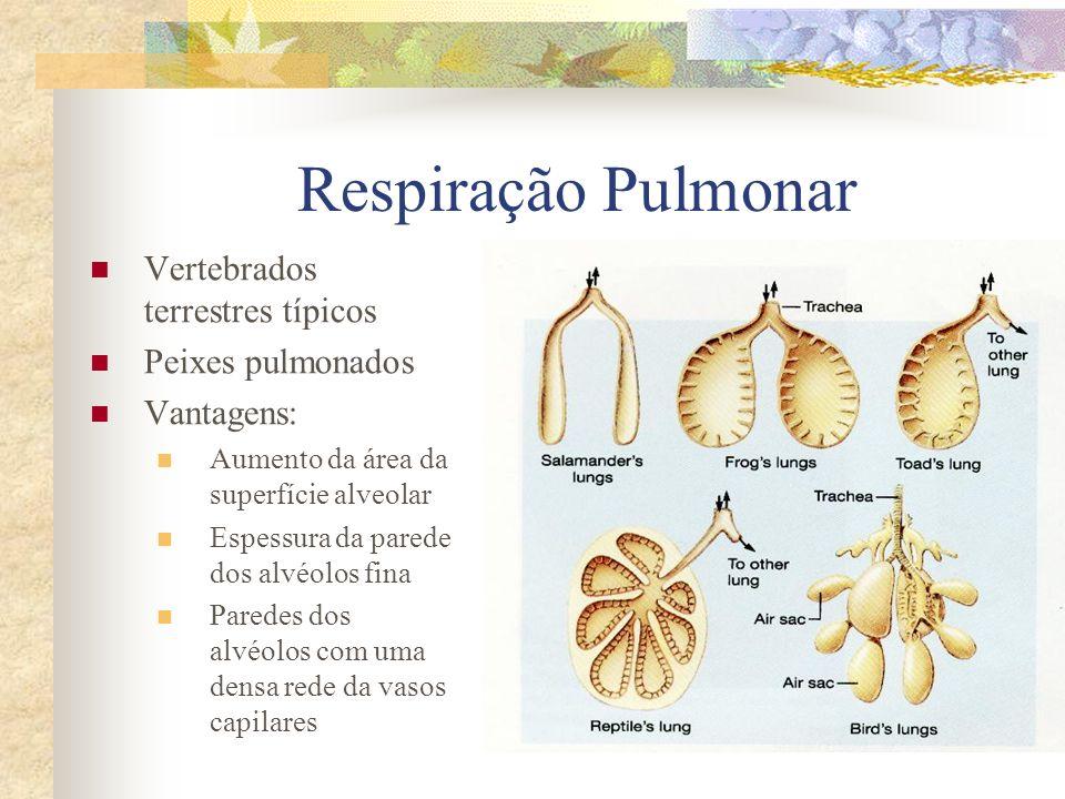 Respiração Pulmonar Vertebrados terrestres típicos Peixes pulmonados