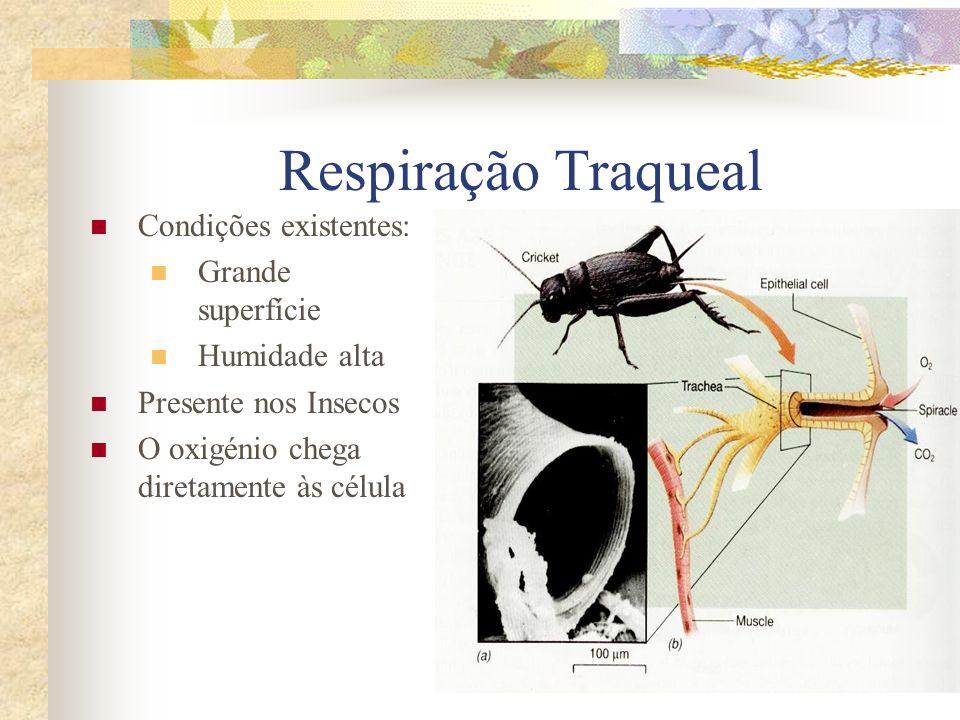 Respiração Traqueal Condições existentes: Grande superfície