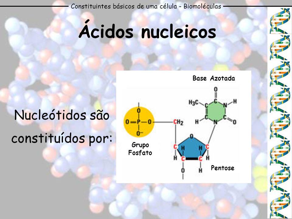 Ácidos nucleicos Nucleótidos são constituídos por: