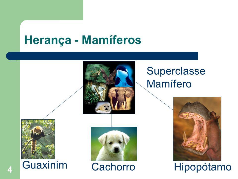 Herança - Mamíferos Superclasse Mamífero Guaxinim Cachorro Hipopótamo