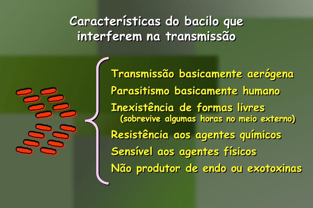 Características do bacilo que interferem na transmissão