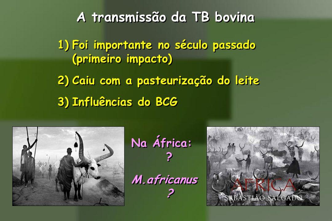 A transmissão da TB bovina