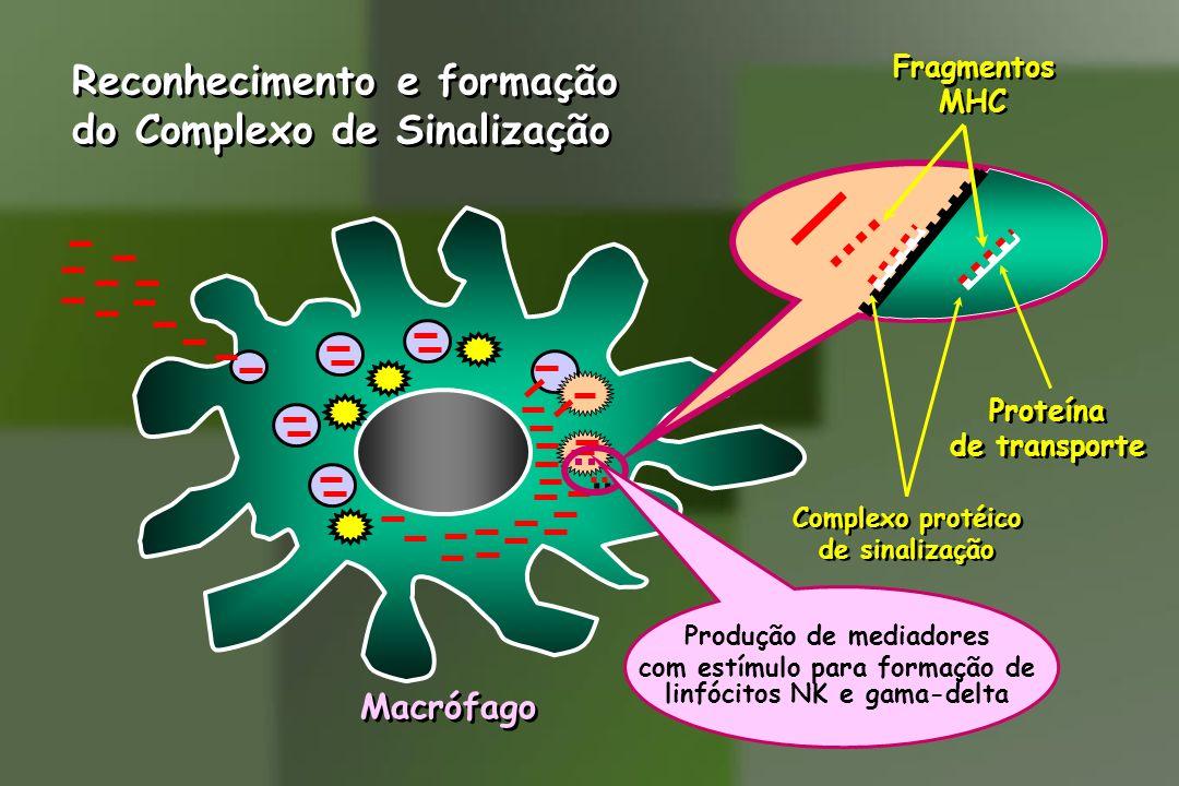 Reconhecimento e formação do Complexo de Sinalização