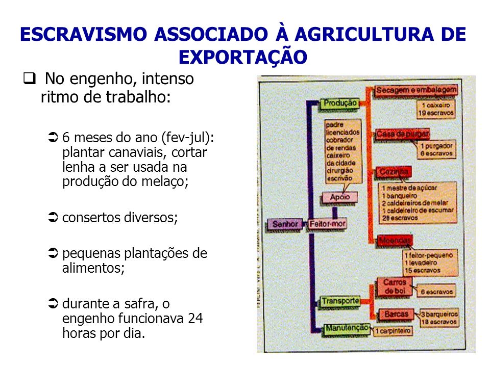 ESCRAVISMO ASSOCIADO À AGRICULTURA DE EXPORTAÇÃO