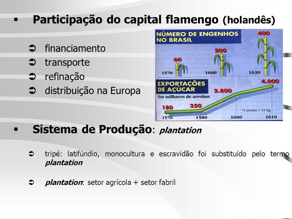 Participação do capital flamengo (holandês)