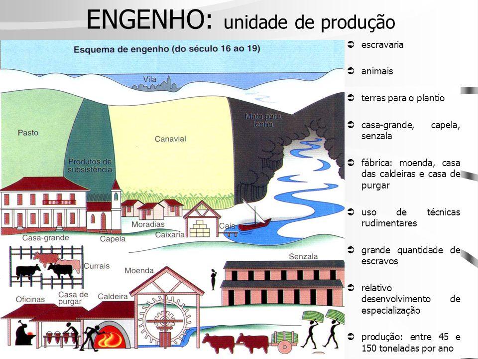 ENGENHO: unidade de produção