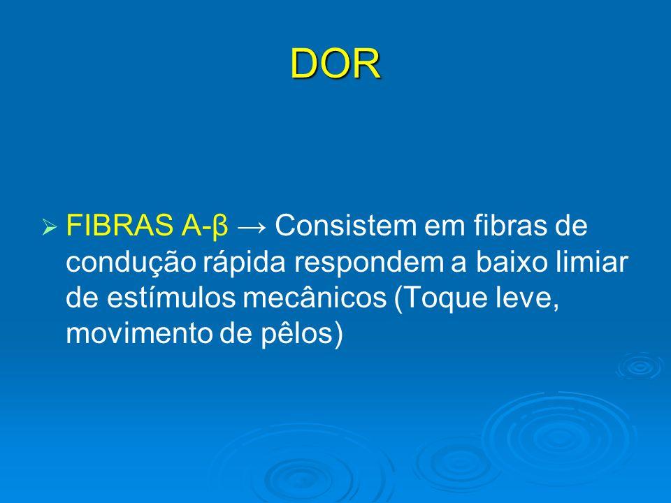 DORFIBRAS A-β → Consistem em fibras de condução rápida respondem a baixo limiar de estímulos mecânicos (Toque leve, movimento de pêlos)
