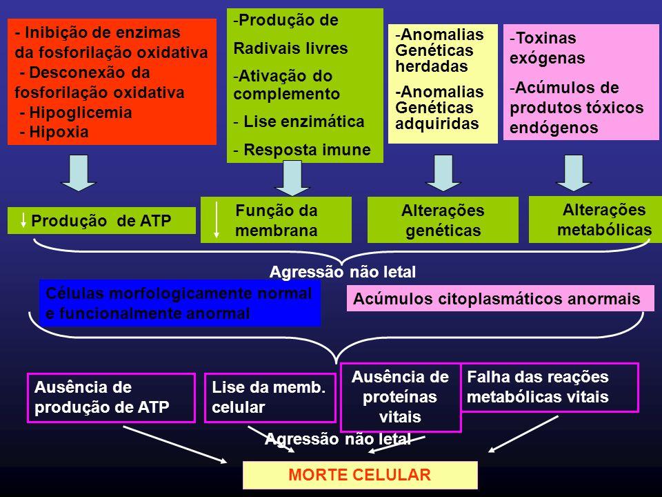 Alterações metabólicas Ausência de proteínas vitais