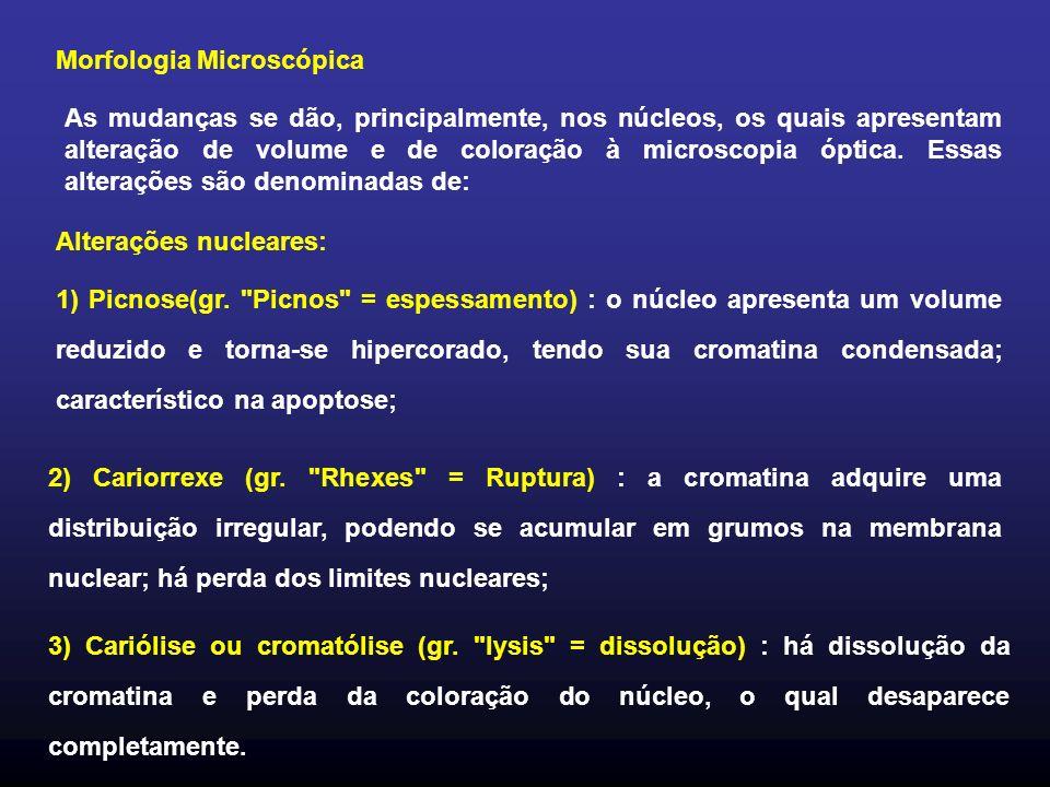 Morfologia Microscópica