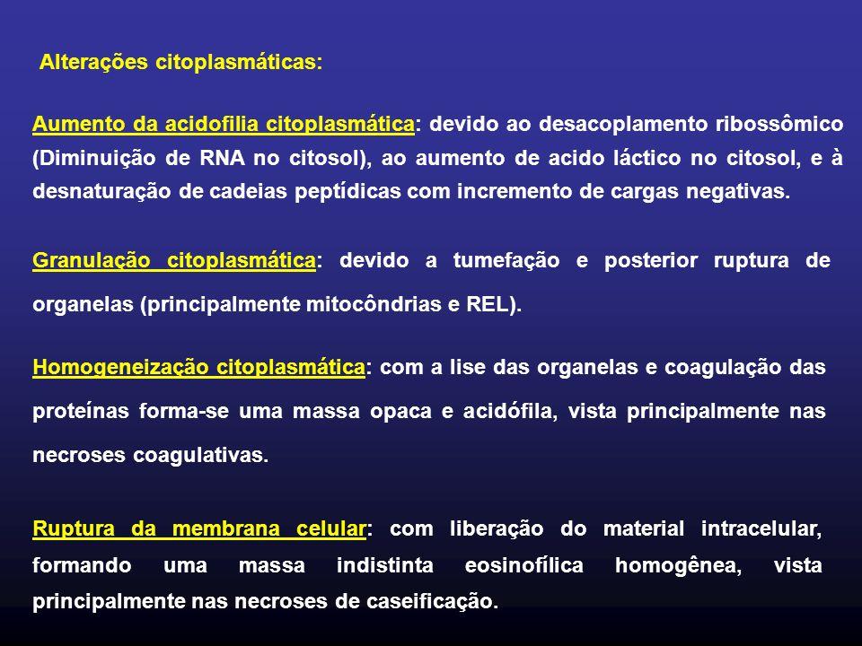 Alterações citoplasmáticas: