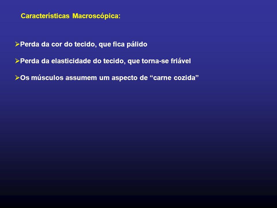 Características Macroscópica: