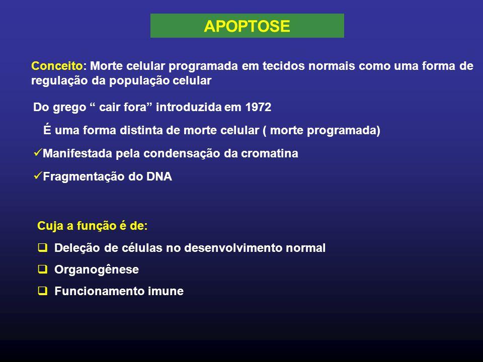 APOPTOSE Conceito: Morte celular programada em tecidos normais como uma forma de regulação da população celular.