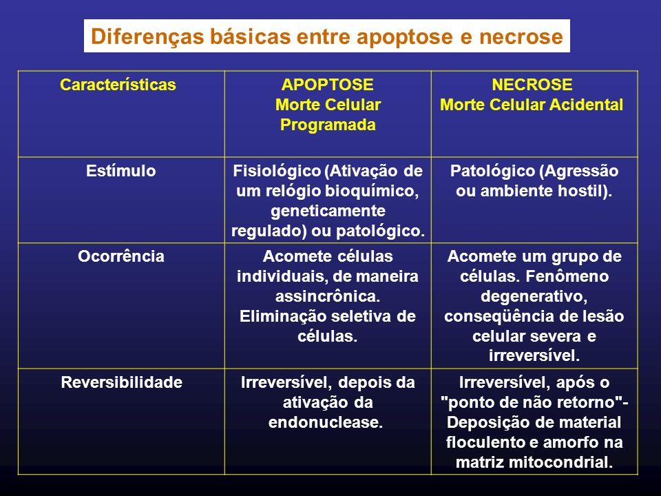 Diferenças básicas entre apoptose e necrose