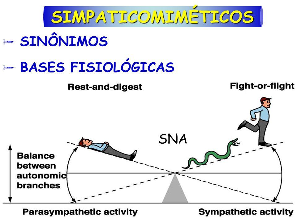 SIMPATICOMIMÉTICOS  SINÔNIMOS  BASES FISIOLÓGICAS SNA
