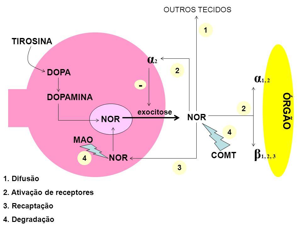 α2 α1, 2 β1, 2, 3 - ÓRGÃO TIROSINA DOPA DOPAMINA NOR NOR MAO COMT NOR