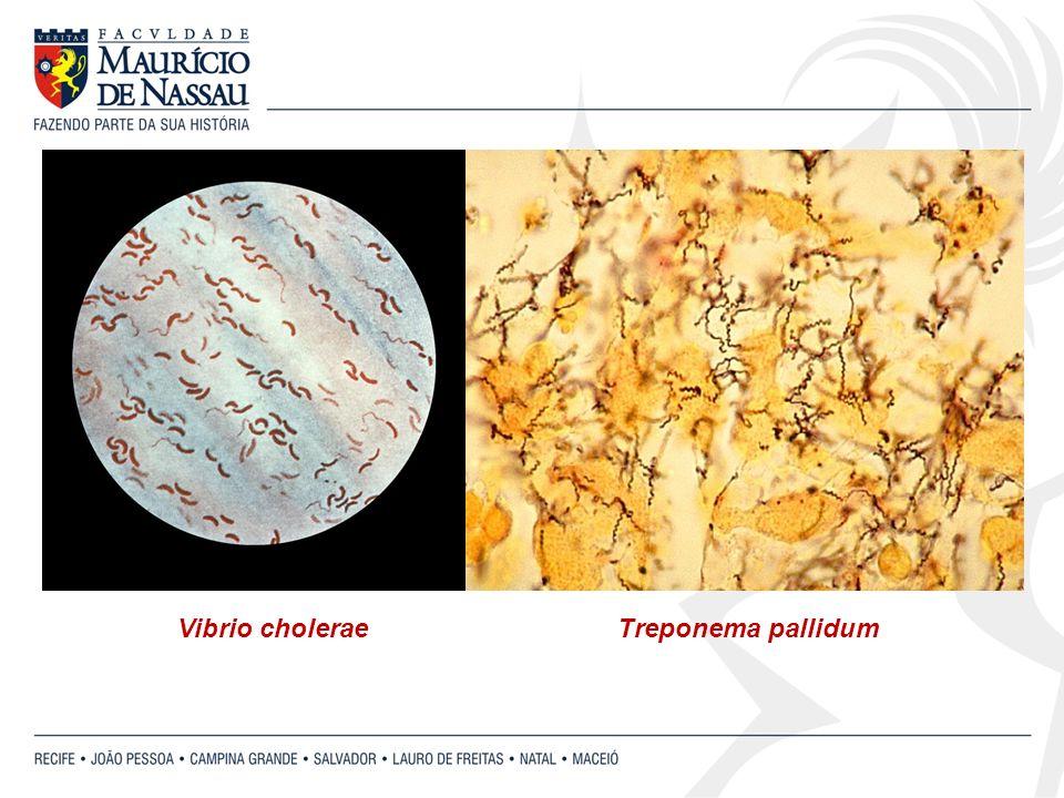 Vibrio cholerae Treponema pallidum
