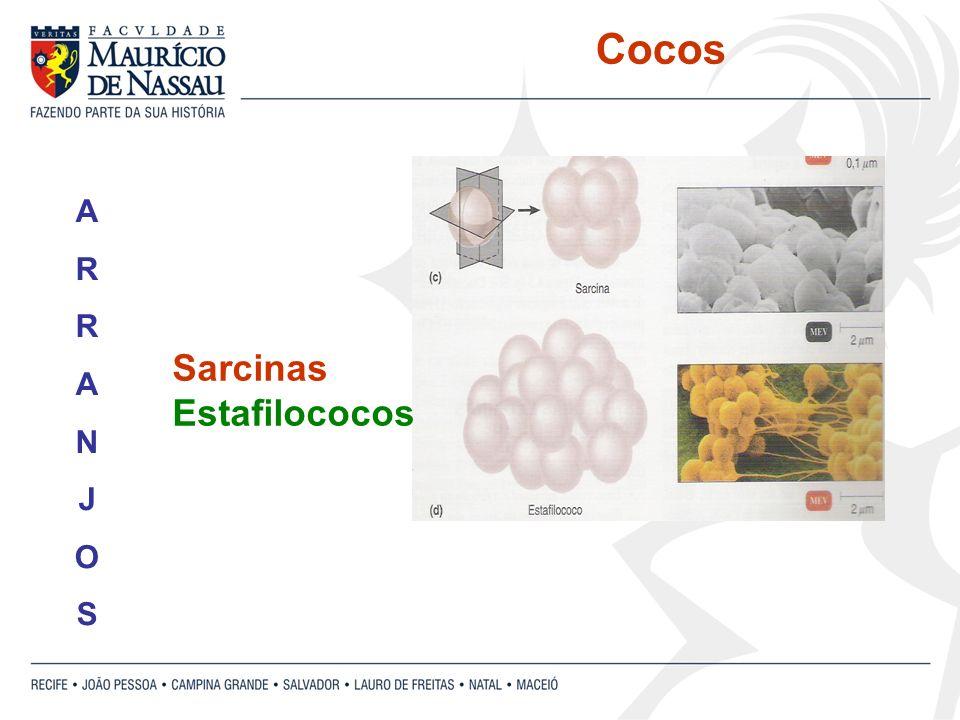 Cocos A R N J O S Sarcinas Estafilococos