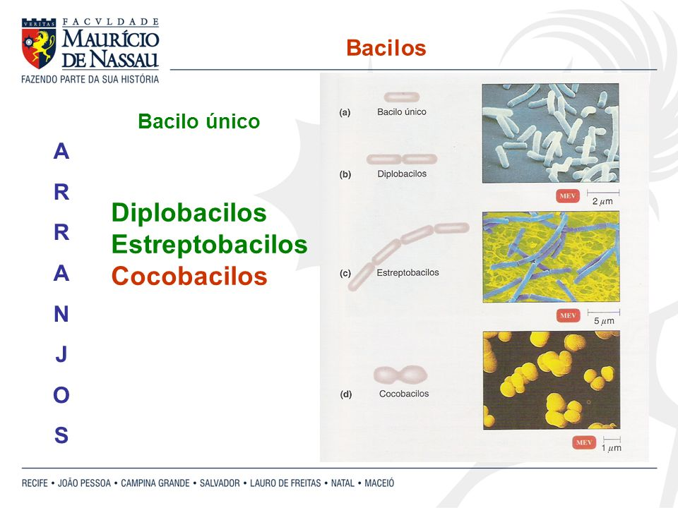 Diplobacilos Estreptobacilos Cocobacilos Bacilos A R N J O S