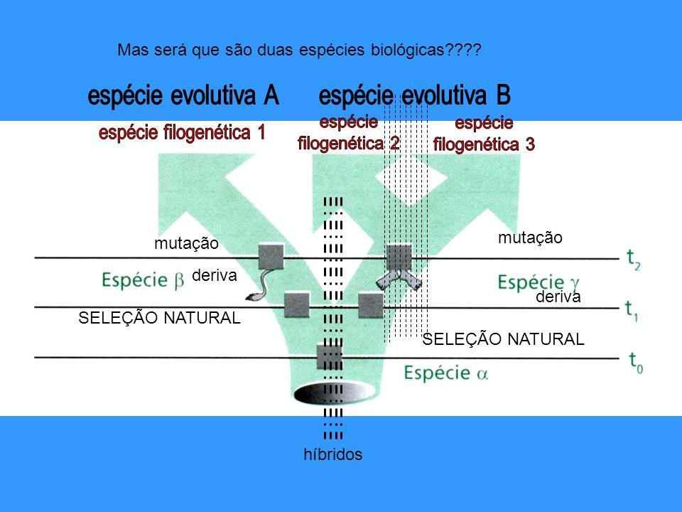 espécie evolutiva A espécie evolutiva B