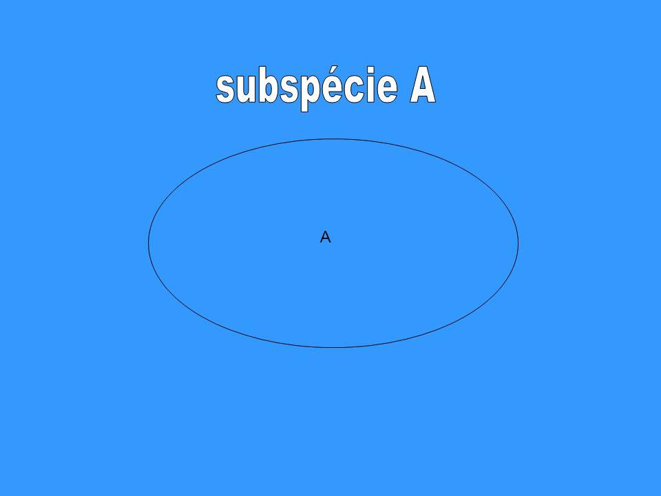 subspécie A A