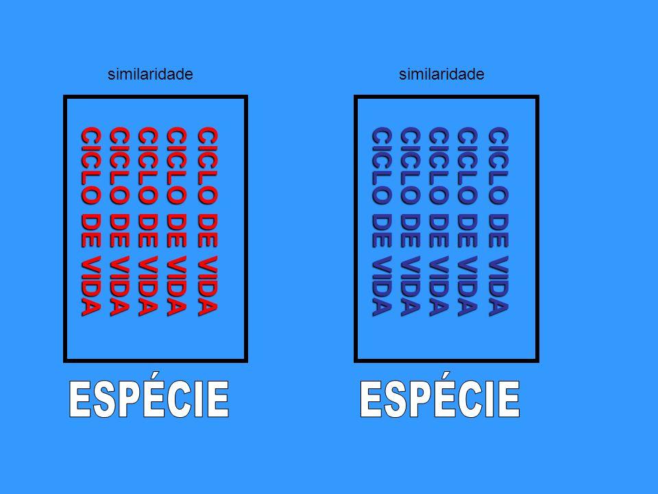 ESPÉCIE ESPÉCIE CICLO DE VIDA CICLO DE VIDA CICLO DE VIDA