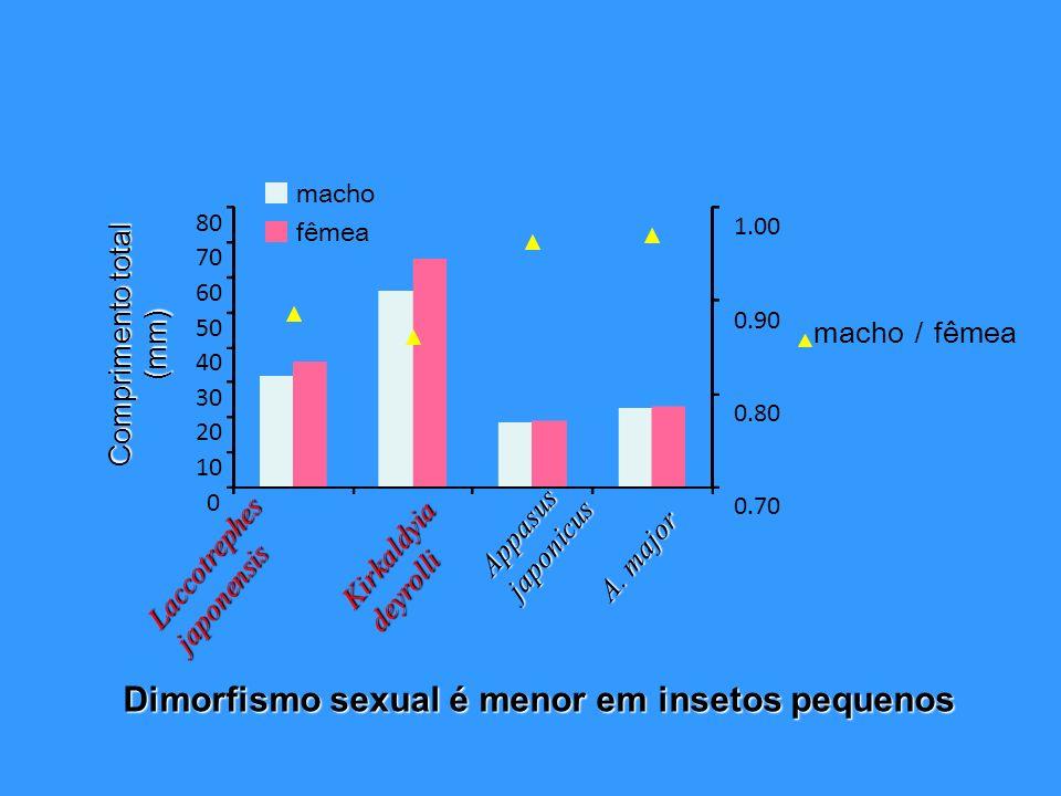 Dimorfismo sexual é menor em insetos pequenos