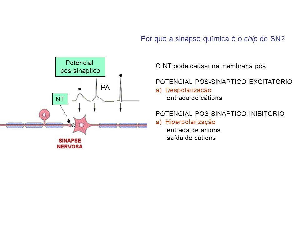 Por que a sinapse química é o chip do SN