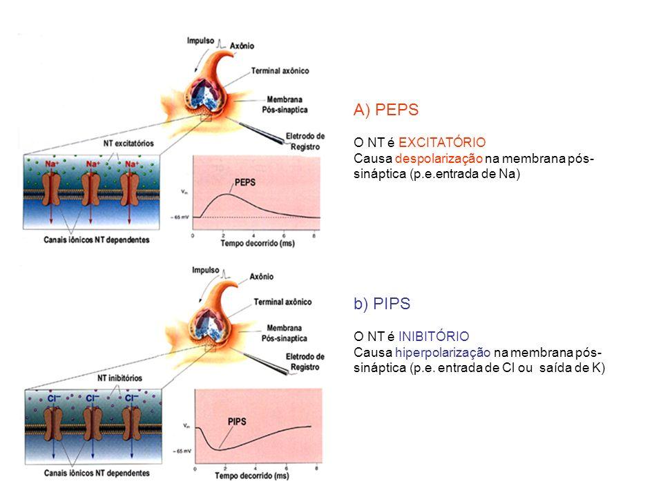 A) PEPS b) PIPS O NT é EXCITATÓRIO