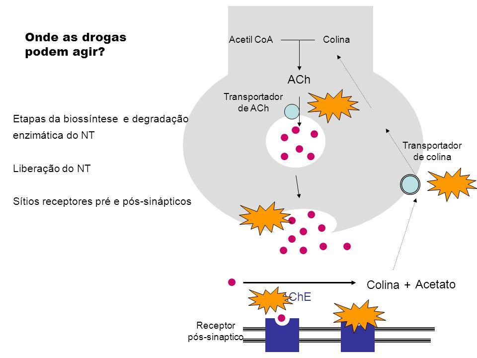 Onde as drogas podem agir ACh Colina + Acetato AChE