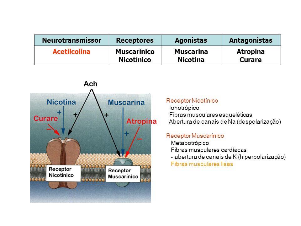 Neurotransmissor Receptores Agonistas Antagonistas Acetilcolina