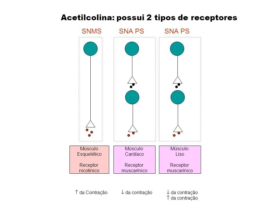 Acetilcolina: possui 2 tipos de receptores