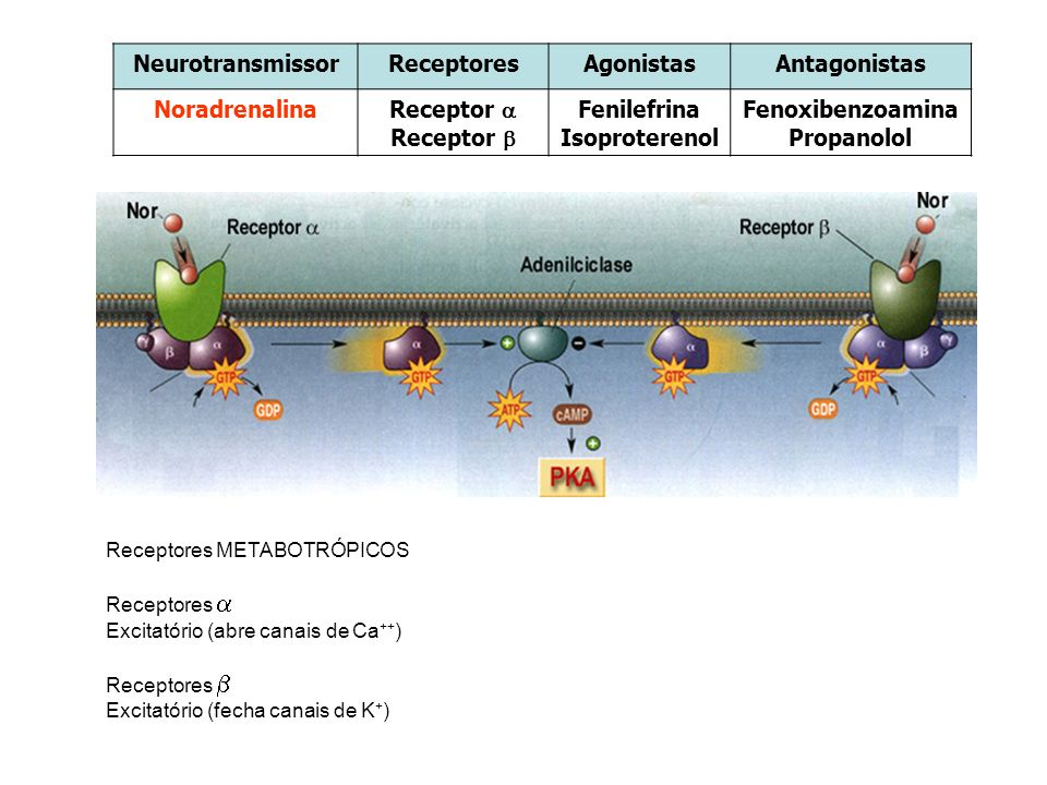 Neurotransmissor Receptores Agonistas Antagonistas Noradrenalina