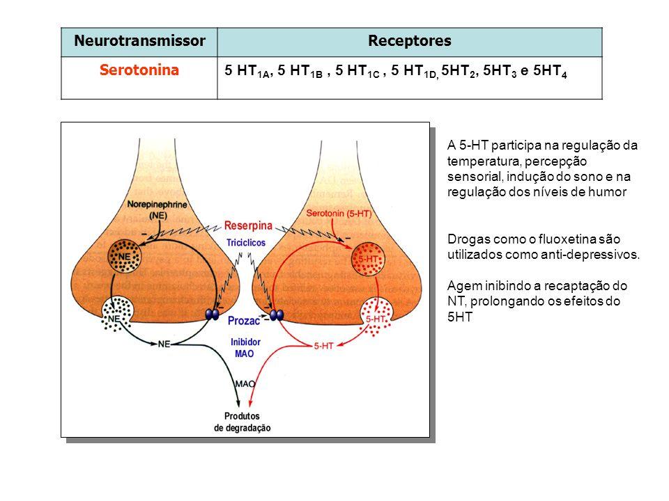 Neurotransmissor Receptores Serotonina