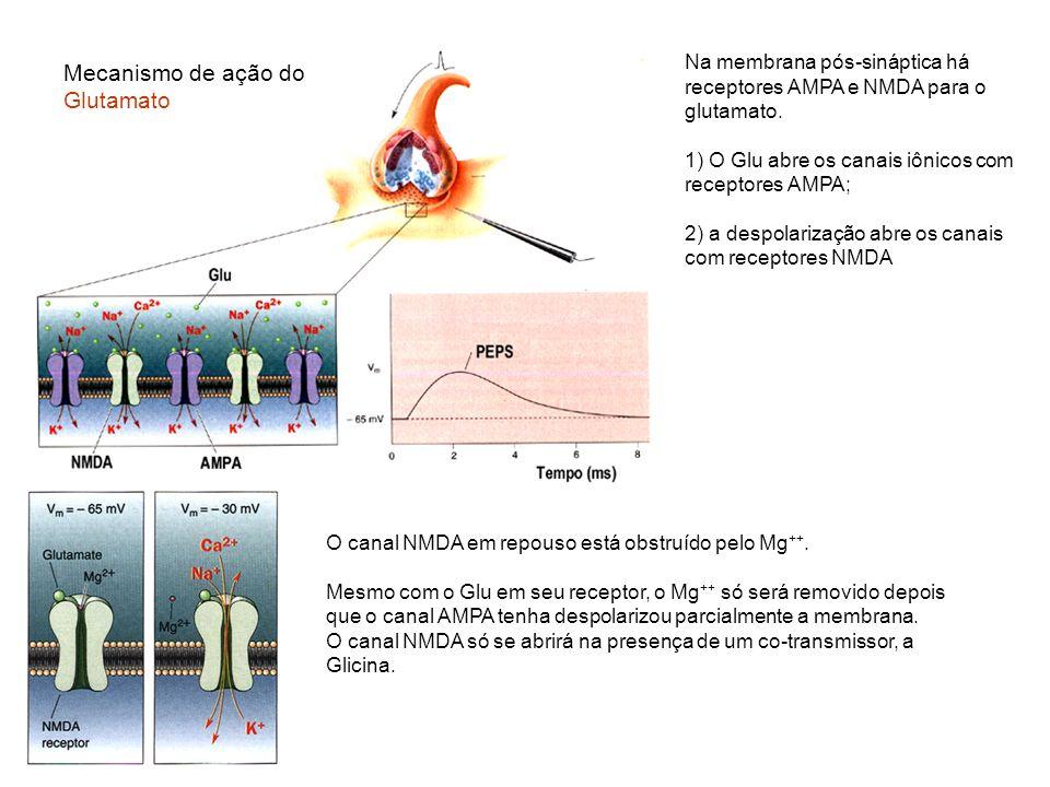 Mecanismo de ação do Glutamato