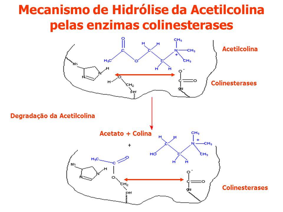 Mecanismo de Hidrólise da Acetilcolina pelas enzimas colinesterases