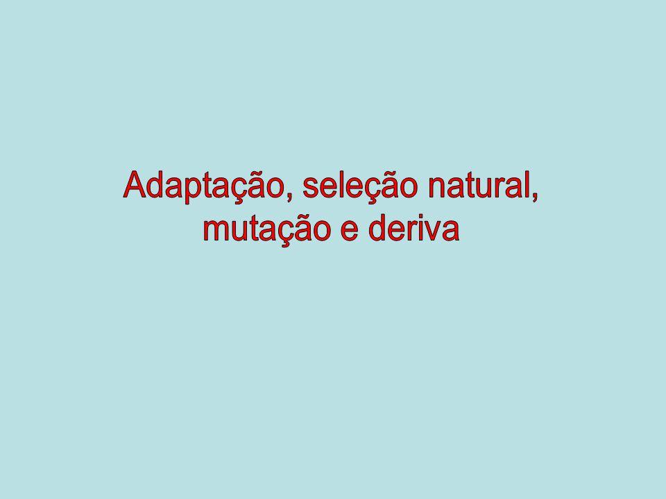 Adaptação, seleção natural,