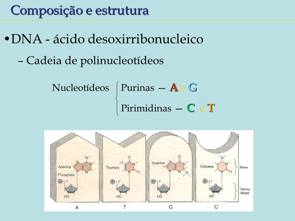 Composição e estrutura